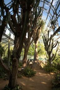 Cactusss in de Botanic Garden